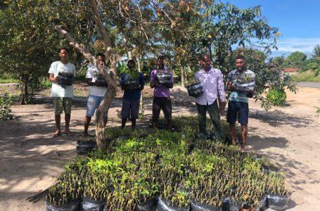 10 mil mudas de mandioca para a Agricultura Familiar de Alcobaça